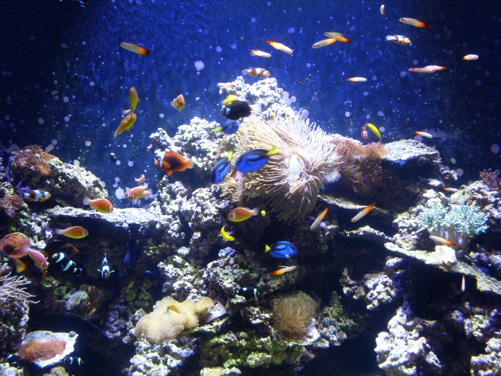 Just one of the many, many pictures I took at the aquarium (and one of the few that didn't turn out horribly).
